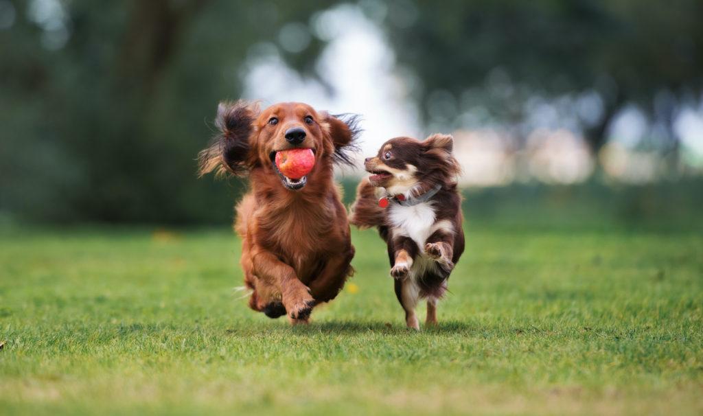 Vaccins chien Vétérinaire Renens